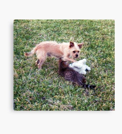 Playing in the sunshine with friends Canvas Print