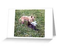 Playing in the sunshine with friends Greeting Card