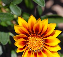 Hello Sunshine by vbk70