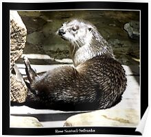 North American River Otter Poster