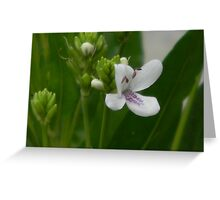 American Water-WIllow - closeup Greeting Card