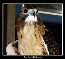 Red-Tailed Hawk by Rose Santuci-Sofranko