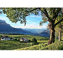 Italian Vineyards Photographic Print