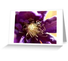 Clematis-Haku Ookan Greeting Card