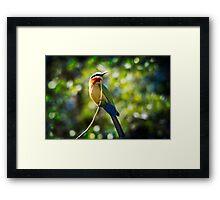 { bird of the rainbow } Framed Print