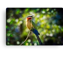 { bird of the rainbow } Canvas Print