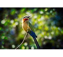 { bird of the rainbow } Photographic Print