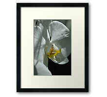 Gently Diffused  Framed Print