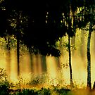 Spring sunrays  by Alan Mattison