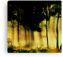 Spring sunrays  Canvas Print