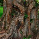Treebeard, King of the Ents by Steve
