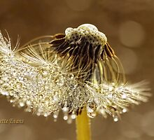 A golden morning by Lyn Evans