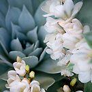 Garden Blooms by Mark Ramstead