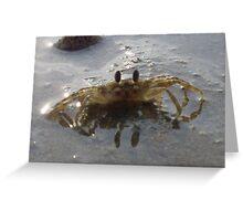 Ghost Crab - Ko Yao Noi Greeting Card
