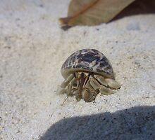 Hermit Crab - Ko Phi Phi by rthorpe1985