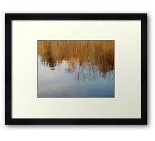 Secret Pond Framed Print