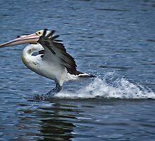 Landing by BoB Davis