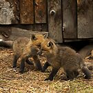 Fox Kitt's 3 by John  Sperry
