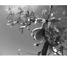 desert twig scape Photographic Print