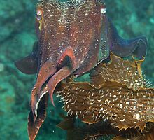 Cuttle time by Hugh Pederson