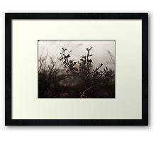 Brush Feild Framed Print