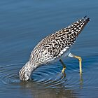 Wood Sandpiper by KAREN SCHMIDT