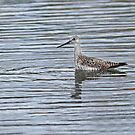 Greater Yellowlegs Alone in the Marsh by Bill McMullen