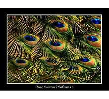 Peacock Feathers (Close-up) Photographic Print