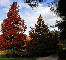 Autumn In Picton by Evita