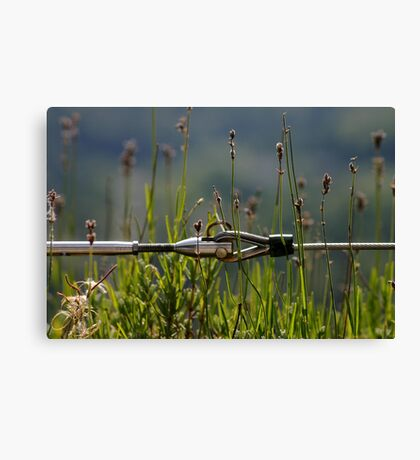 Strong & Delicate Canvas Print