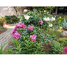 Her Peony Garden Photographic Print