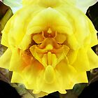 A Face in the Flower by Christine &quot;Xine&quot; Segalas