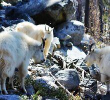 3 Goats Gruff by Debbie Roelle
