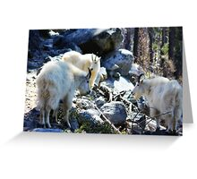 3 Goats Gruff Greeting Card