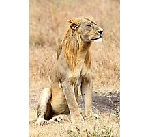 African Lion, Adolescent Male, Serengeti, Tanzania  Photographic Print