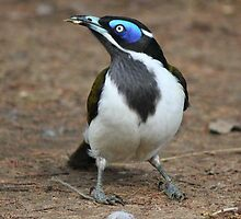 Blue-faced Honeyeater by Dean Cunningham