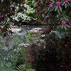 Woodland pond by Jennifer Bradford