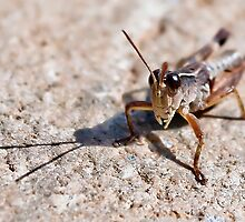 Grasshopper by Ryan Cawse