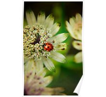 Flower and Ladybird Poster