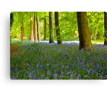 Woodland Scene - Thorpe Perrow. Canvas Print