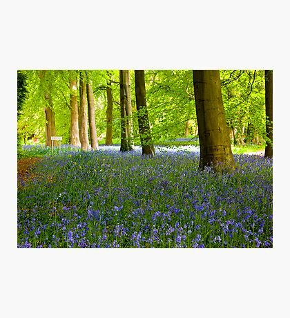 Woodland Scene - Thorpe Perrow. Photographic Print