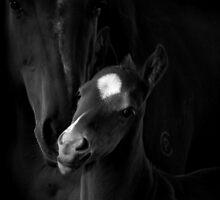 Tenderness by Penny Kittel