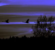 Night flight by Alan Mattison
