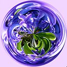 Spherical Bluebell by capney