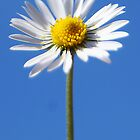 Daisy Chain by JaymeeLS