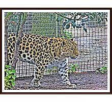""""""" Almost extinct """" Photographic Print"""