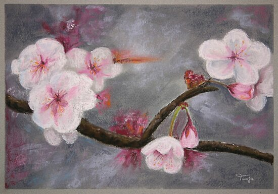 Cherry Blossoms by Tanja Udelhofen