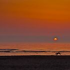 Greyhound at Sunset by J. Day