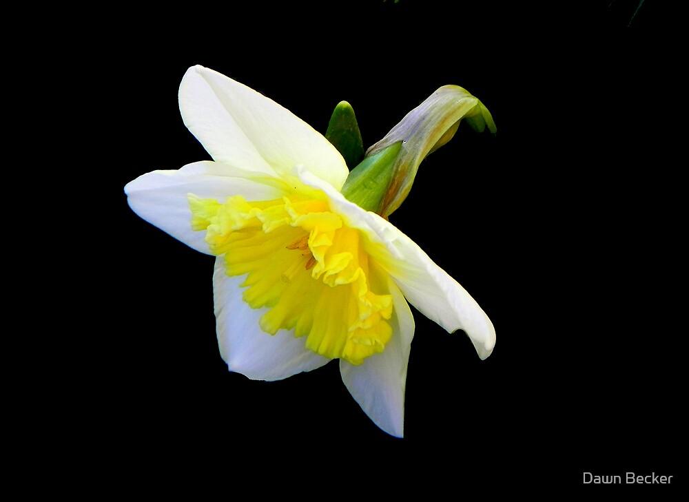 Spring has sprung!!! © by Dawn M. Becker