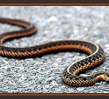 SLITHERING ALONG by BOLLA67